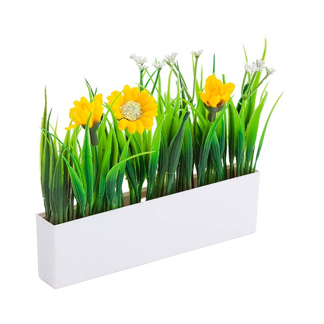 Botania dekorativní rostliny - multicolor