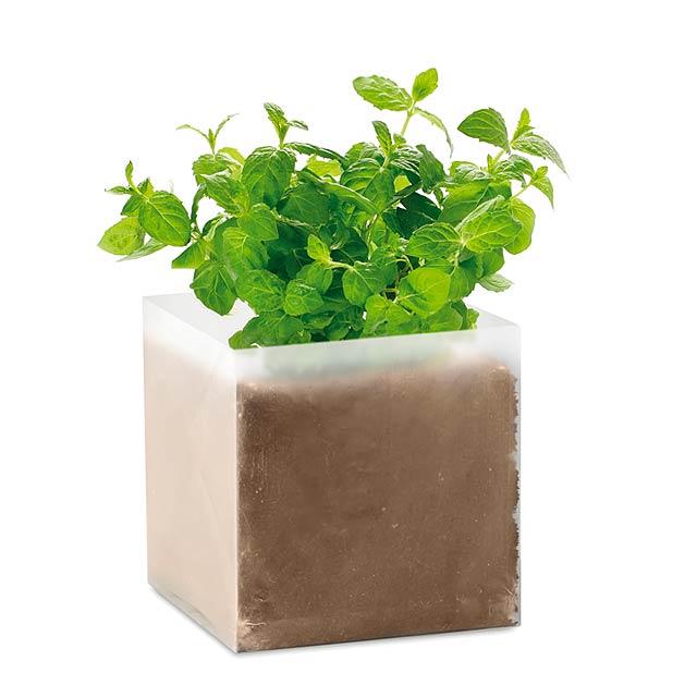 MINT - Kompost se semínky Máta        - béžová